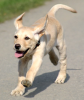 run puppy run