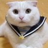 Mayor Sailor Suit Cat