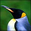 Все птицы всех миров