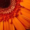 starrc userpic