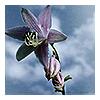 Becky: flower