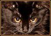 cat (my)