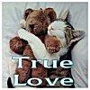 kitty_teddy_true_love