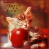 Elv: furry kitten love
