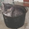 witch_kittin userpic