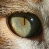 boris's eye