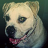 maggie_dog userpic