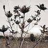 needles_around userpic