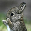 cynicsquirrel userpic