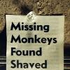 missing monkeys