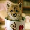 Helen the Fox