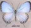 alecto23 userpic