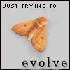 ani d evolve