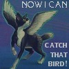 Now I Can Catch That Bird