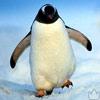 Идущий пингвин