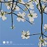 flowers- letterboxx