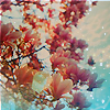 S: pretty flowers