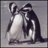 seaside_penguin userpic