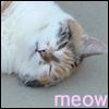 Cici - meow