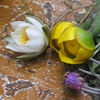 цветуёчки