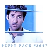 Pooh: SGA - Shep puppyface (by samjack_girl)