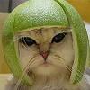 Melon Kittie
