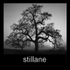 Stillane: Tree Me