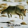 CoyoteLevitates
