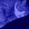 sleep_perchance userpic