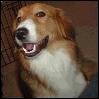 Prince Charlie Dog's fanbase