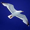 Птица в небесах