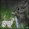 bunny yay