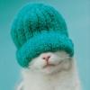 ricky600: gatto carino