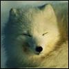 Dozing fox