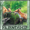 Friendship Foxes