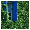 Kel: blue shutter