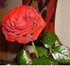 rosello userpic