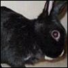taffahrabbit userpic