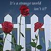 BV - Roses Text