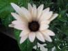 onyxwings userpic