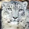 demon_cat_snowy userpic