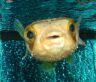 hammaboo userpic