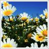 placeformystuff userpic