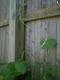 daninamoon9 userpic