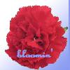 bandenthusiast userpic
