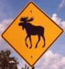 Sedate Moose Sign
