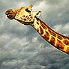 aradelida userpic