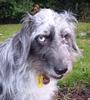 dogologist