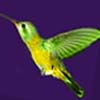 kolibri_2006 userpic