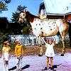 [pippi] Pippi horse
